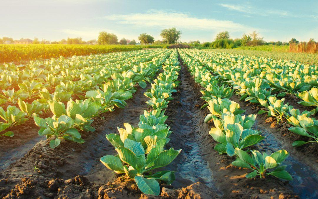 Toronto man, Hugh Walker, found guilty in Jamaican agriculture fraud scheme