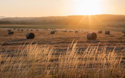 Online hay sale scam is rising in Alberta – RCMP warn citizens